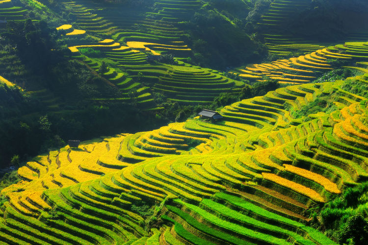 High Angle View Of Terraced Rice Field