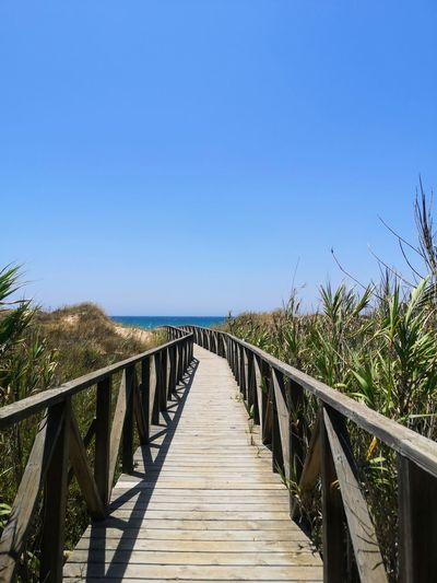 Footbridge over plants against clear blue sky