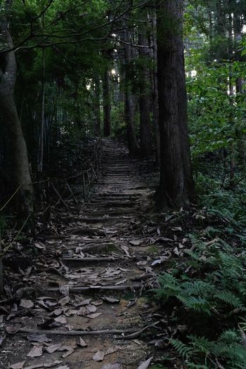 加茂山公園 Kamo Canon EOS8000D Takumar