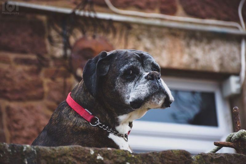 Dog Whatareyoulookingat? Portrait Nikon Dog❤ Waiting For Someone