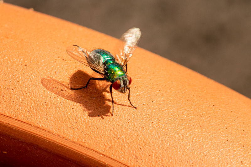 High angle view of fly