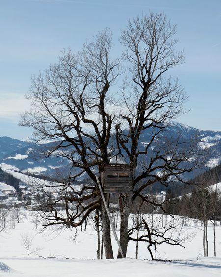 Bare trees on snowcapped field against sky during winter
