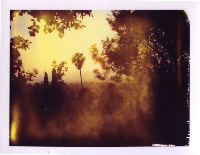 Atmosphere Atmospheric Mood Dramatic Sky Light Mistake Orange Color Palm Tree Polaroid Packfilm Silhouette Sky Showcase: February