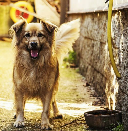 Dog Animal Themes Pets One Animal Looking At Camera Domestic Animals Portrait Mammal Outdoors No People Front View Day Close-up Nature