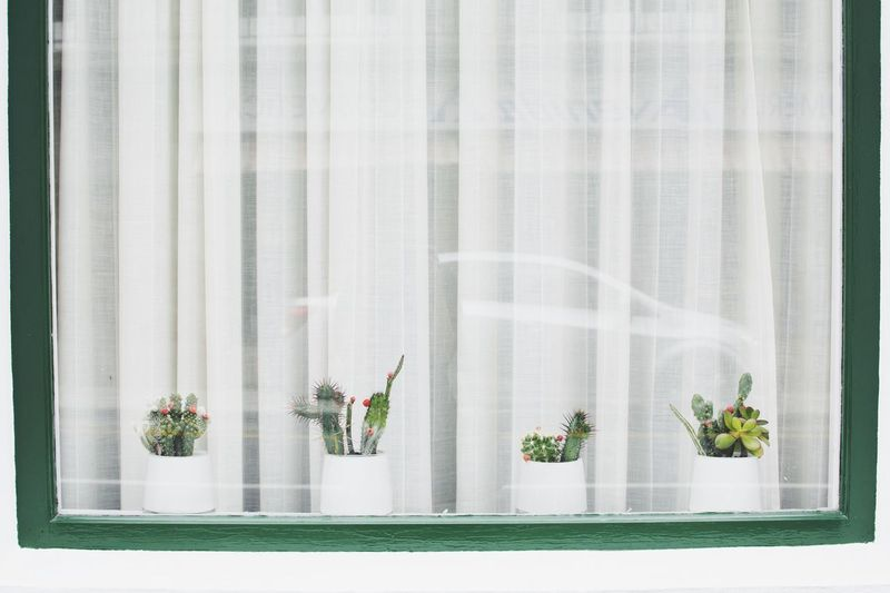 Close-up of potted plants on window
