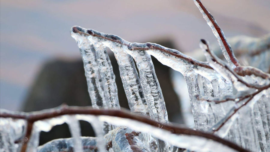 Close-up of icicles on branch