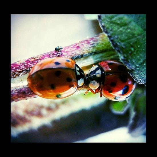 #ig_closeups #macro_secrets #macrolicious #macro Macro Macrolicious Macroaddictsanonymous Rsa_ladies Ig_closeups Macro_highlight Anthropods_anonymous Jj_macro Bestofmacros Hdm_insects Macro_secrets Nature_uc