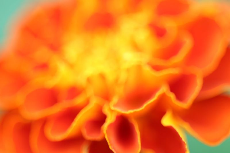 Flowers Japan Yellow Canon Canon70d Tamron Lens Fukui Japanese
