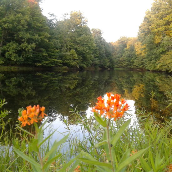 Growth Flower Nature Beauty In Nature Lake Water Orange Color Plant Outdoors Tranquility Day Indiana Harvest My Daily View Beauty In Ordinary Things No Filter Close-up Sky EyeEmNewHere The Week On EyeEm Tranquility Moments Autumn In Indiana Countryside Glamour Beauty In Nature Rural Scene