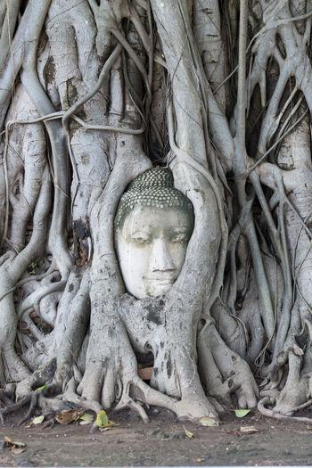 Buddha Sculpture Amidst Tree Roots At Wat Mahathat
