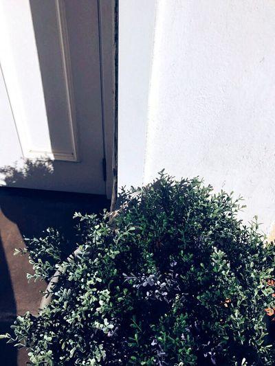 Доброго времени суток. Сегодня время очередной странной фотографии. В этот раз я запечатлела искусственную клумбу около пиццерии. Мне очень нравятся цвета и тень. Надеюсь, вам тоже понравится😊. Всем любви и удачи, верьте в свои мечты ❤ Door Day Plant No People Nature Close-up Architecture Growth