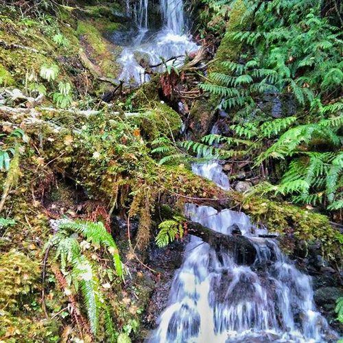 All this rain is sure bringing out a lot of nice waterfalls! Upperleftusa Waterfalls Snowfed Optoutside Olympicnationalpark Livetravelexplore