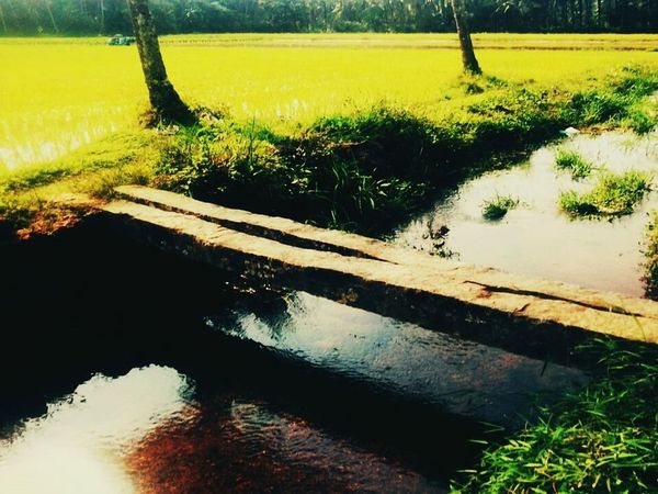 EyeEm Nature Lover Greenery Faces Of Summer Nature_collection Traveling Sunset Summer Views IPS2015Summer OpenEdit IPS2016Nature Bridge Home Is Where The Art Is My Favorite Place Granny's House Summer Vacation SUMMER BREAK Childhood Memories Childhood Days All Time Favorite ❤️