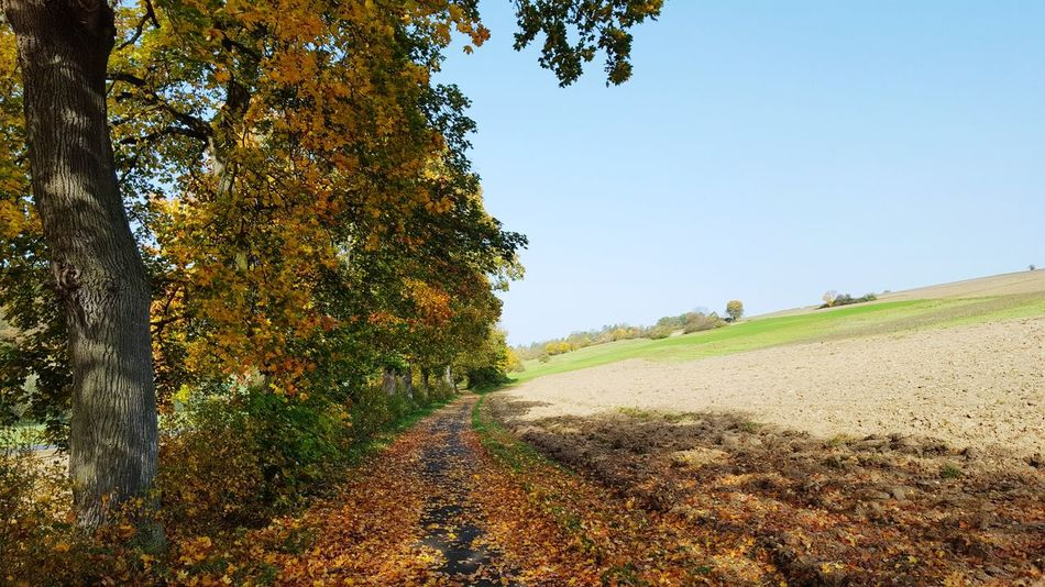 Sonnenschein  Nordhessen Tree Nature Rural Scene Day No People Freshness Landscape Sky Beauty In Nature Field Outdoors Autumn Colors