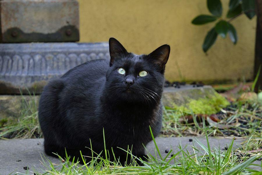 Very black. Nerone in the garden