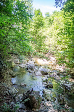 Beauty In Nature Day Downloading Flowing Flowing Water Forest Green Color Growth Land Nature No People Outdoors Plant Rock Rock - Object Scenics - Nature Solid Stream - Flowing Water Tranquil Scene Tranquility Tree Water
