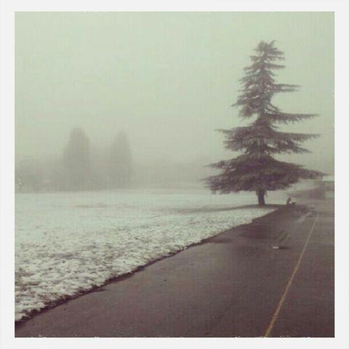 When It Snowed Snow Day ❄ Winter Trees Like4like First Eyeem Photo