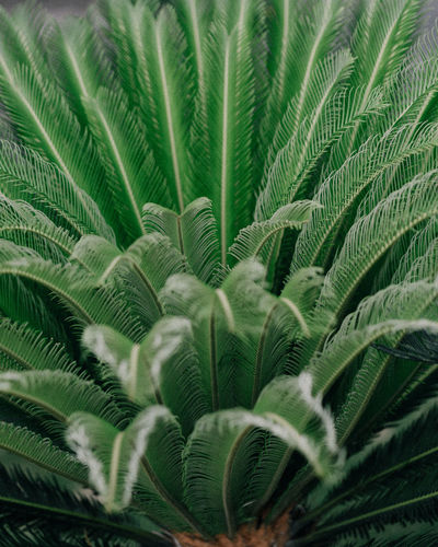 The Week on EyeEm My Best Photo Leaf Plant Part Growth Plant Green Color Nature No People Frond Beauty In Nature Palm Tree Palm Leaf Fern Close-up Tropical Climate Backgrounds Full Frame Day Outdoors Tree Environment Rainforest Tropical Tree Springtime Decadence