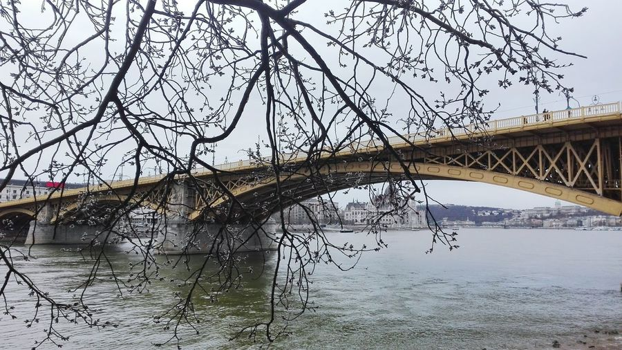 Water Tree Bridge - Man Made Structure Nature Outdoors Built Structure Beauty In Nature Budapest