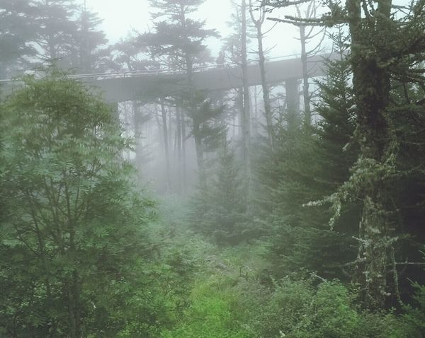 Clingmansdome Tennessee Nature Landscape
