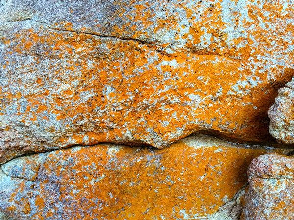 Orange Lichen Coastal Nature Orange Lichen Orange Rock Lichen Orange Western Australia Rock Formation Bunker Bay Australia Coast Line  Coastal Rock Rock Closeup Textures And Surfaces Abstract Abstract Nature Nature Backgrounds Nature Textures
