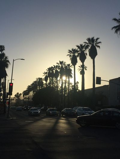 California Los Angeles, California Architecture Car City Clear Sky In A Row Land Vehicle Mode Of Transportation Motor Vehicle Nature No People Outdoors Palm Tree Plant Road Sky Street Street Light Transportation Travel Tree Treelined Tropical Climate EyeEmNewHere
