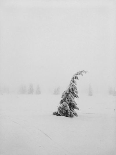 Winter EyeEm Selects Winter Snow Cold Temperature Nature Landscape Weather Tranquility Beauty In Nature Outdoors Tranquil Scene Scenics Day Clear Sky Sky Field No People Tree