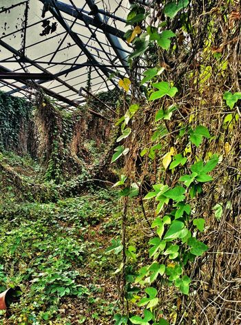 My Secret Garden Abandoned Places Garden Photography Flowers,Plants & Garden EyeEm_abandonment EyeEm Best Shots - Nature Greenhouse In The Greenhouse Eye4photography  EyeEm Best Shots
