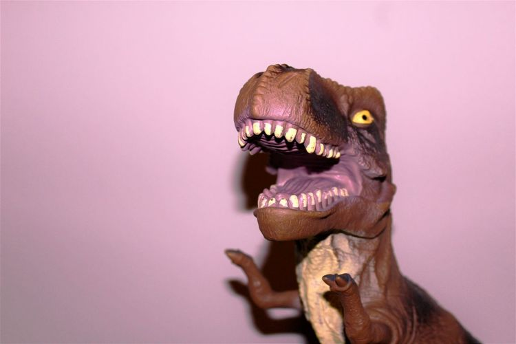 Close-up of dinosaur toy against wall