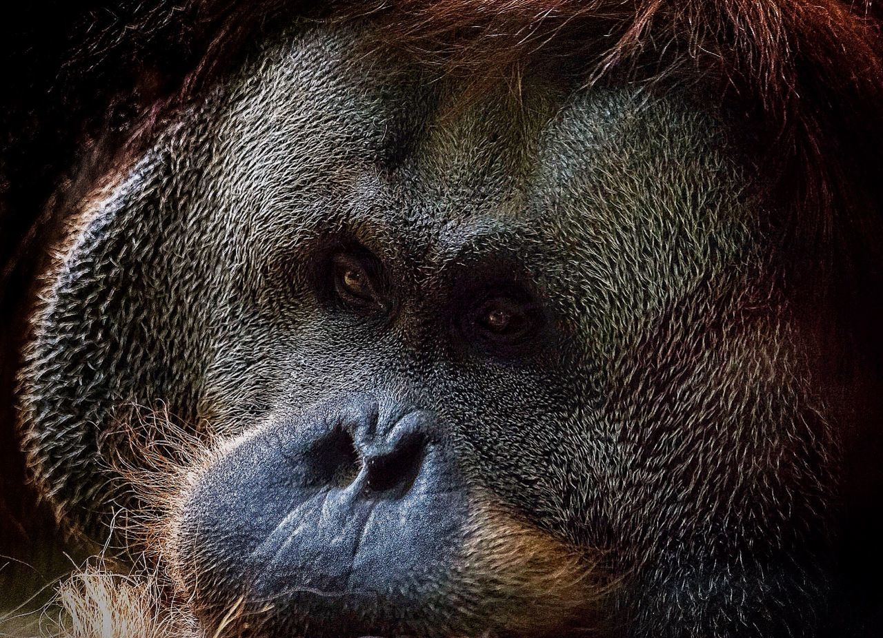 one animal, animal body part, animal head, close-up, portrait, animal wildlife, looking at camera, mammal, animals in the wild, no people, animal themes, nature, day, outdoors