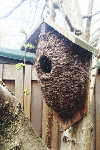 Spring Bird Bird House Handycraft Tree Nesting Box Wooden Wicked