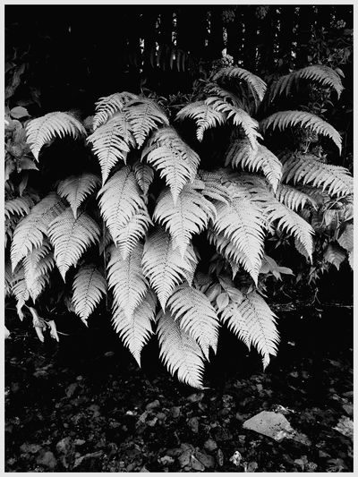 Nature Outdoors Growth Tree Close-up Plant Beauty In Nature Blackandwhite Beauty In Nature Fragility Ferms