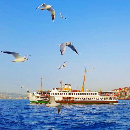 Istanbul Turkey Martı Vapur Deniz ?