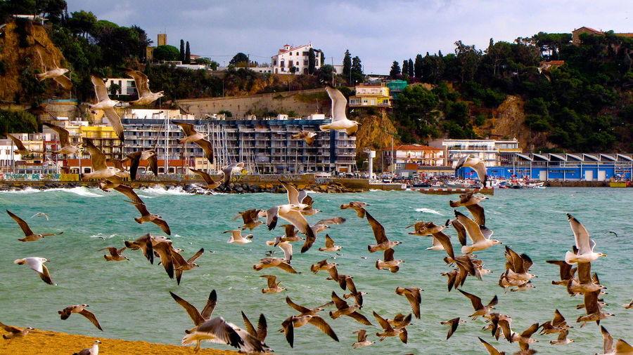 Ocean Ocean View Oceanlife Birds Birds_collection Bird Photography Birds Of EyeEm  SPAIN España Blanes Blanesturismo INSTABLANES Barcelona, Spain Spainish Catalunya Catalonia Rain