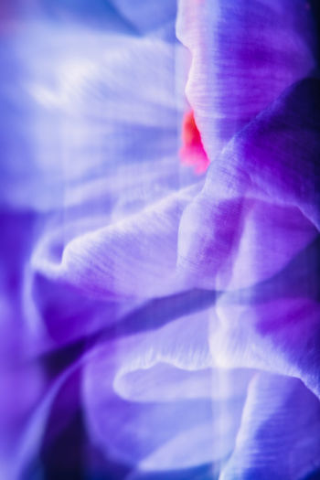 Abstract Abstract Backgrounds Abstract Photography Abstract Art The Week on EyeEm The Week on EyeEm Editor's Picks Macro Macro Photography Macro_collection ICM Intentional Camera Movement ICM Photo Intentional Camera Movement Intentional Blur No People Backgrounds Close-up Nature Freshness Purple Beauty In Nature