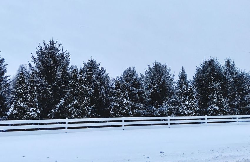 Early Morning Snow Snow Winter Cold Temperature Tree Weather Nature Tranquility Tranquil Scene No People Beauty In Nature Scenics Outdoors Landscape