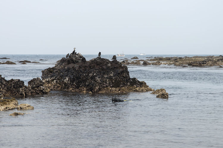 sea birds and haenyeo who is a female diver picking up sea food Animal Themes Beach Beauty In Nature Bird Clear Sky Cormorant  Day Dormant Volcano Female Diver Groyne Haenyeo Horizon Over Water JEJU ISLAND  Nature No People Outdoors Perching Rock - Object Scenics Sea Seongsan Ilchulbong Sky Tranquility Water Wave