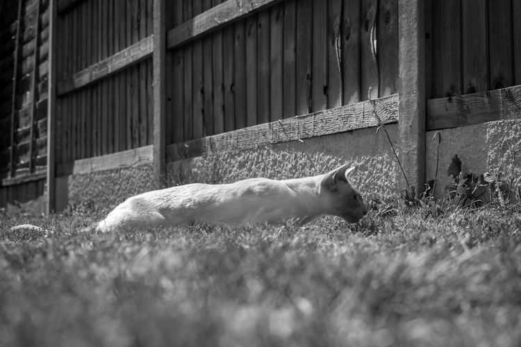 View of a cat resting on grass