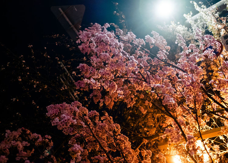 Low angle view of flower tree against sky at night