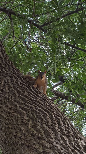 Wildlife & Nature Squirrel Trees And Sky Branch Branches And Sky Animal Mammal