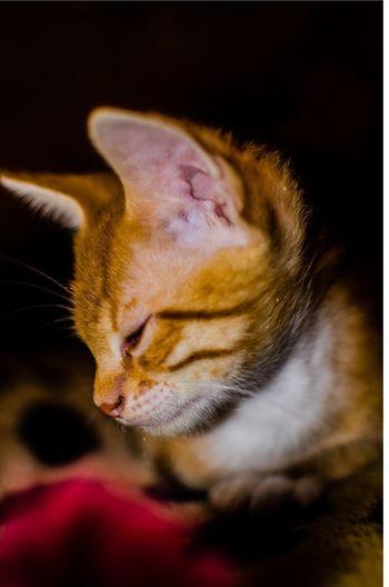 My Kitten Cat Animals Pets Photo Photography Nikon Nikon D7000 Nikon 35mm Dx 1.8 35mm F1.8