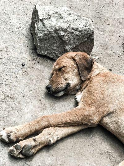 Dog sleeping on rock