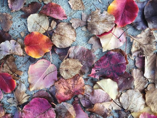 Leaves Autumn Leaf Nature Backgrounds Change Dry Abundance Large Group Of Objects No People Close-up Textured  Fallen Outdoors Beauty In Nature