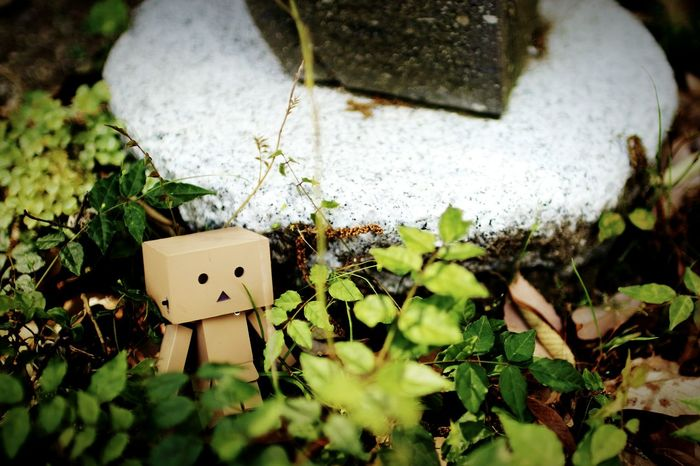 一休み。 Danbo Taking Photos Enjoying Life Relaxing Shrine Stone Resting