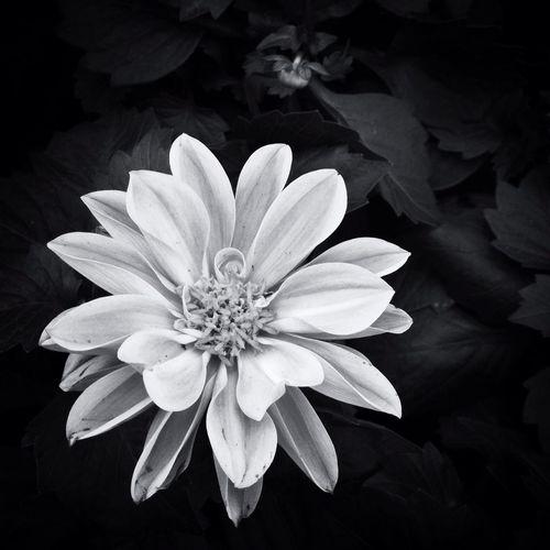 Flowers NEM Green NEM Submissions NEM Black&white