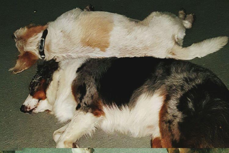 Dogs on floor