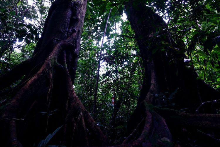 Two Big Trees HUAWEI Photo Award: After Dark Tree Tree Area Forest