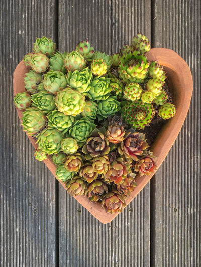 Succulents in a planting pot in the shape of a heart on a wooden terrace Freshness Wood - Material Directly Above Wellbeing Vegetable Table Green Color High Angle View No People Plant Flower Day Close-up Outdoors Terrace Patina Gray Wooden Planting Pot Potted Plant Succulents Shape Heart Heart Shape Succulent Plant