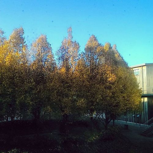 I've the best view from my bedroom window 👑❤🌲🌳 Apartment Groveisland Autumn Nature Limerick