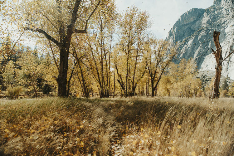 Yosemite Valley Yosemite Yosemite Valley Meadow Trees Nature Scenics - Nature Outdoors Mountains Field Tree Landscape No People Autumn Day Fall